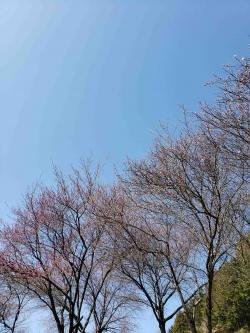 昼神温泉郷内花桃