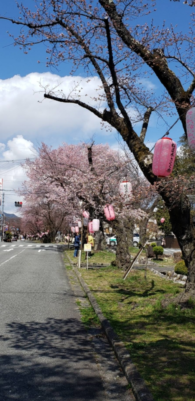 飯田市大宮神社前 桜並木